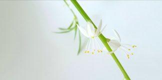Подходящи цветя за отглеждане вкъщи